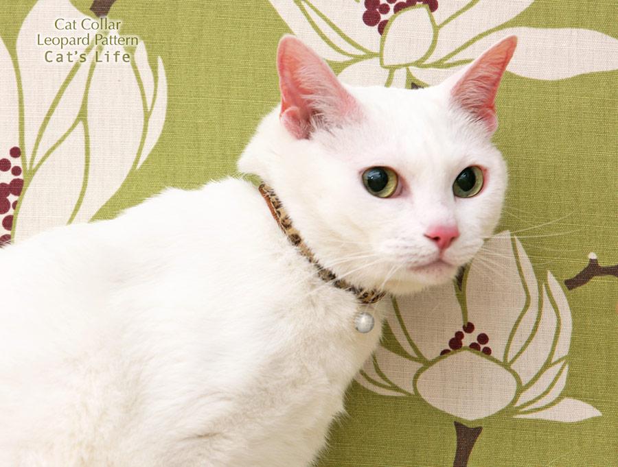 猫の暮らし キャットカラー ヒョウ 首輪