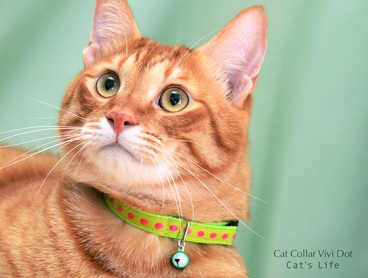 猫の暮らし キャットカラー ヴィヴィドット 首輪