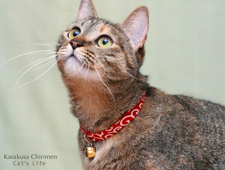 猫の暮らし キャットカラー唐草ちりめん 首輪