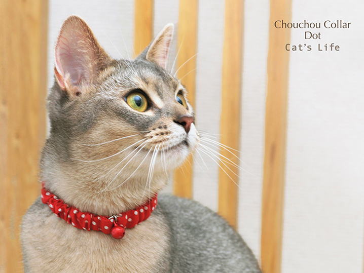 猫の暮らし シュシュカラー ドット 首輪
