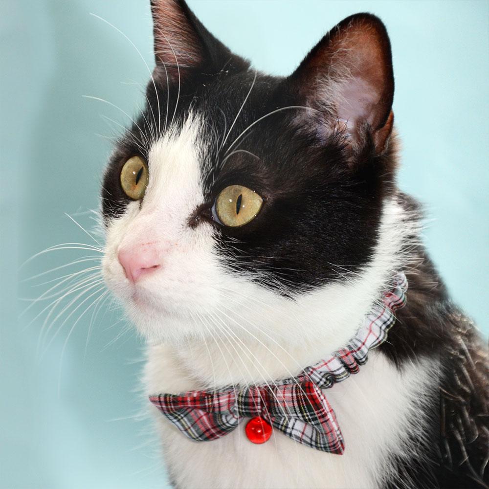 猫の暮らしリボンシュシュカラー