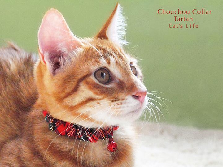 猫の暮らし シュシュカラー タータンチェック 首輪