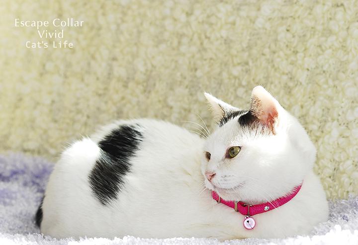 猫の暮らし  ヴィヴィットエスケープカラー 【ゴム,首輪】