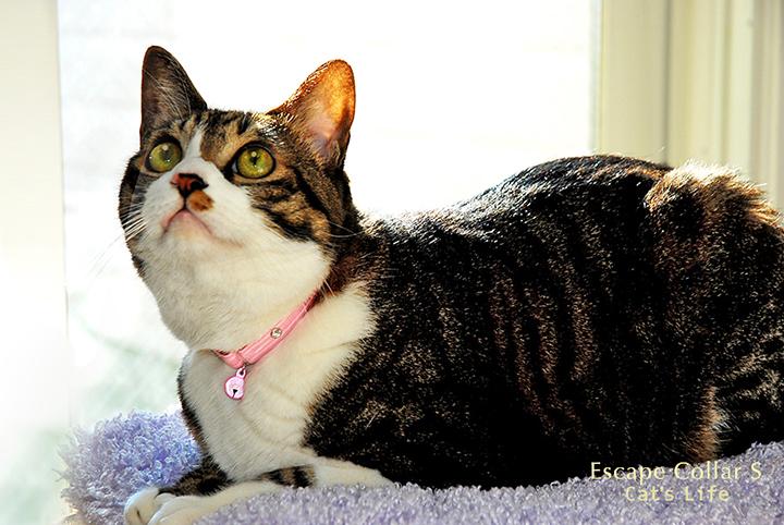 猫の暮らし エスケープカラー Sサイズ