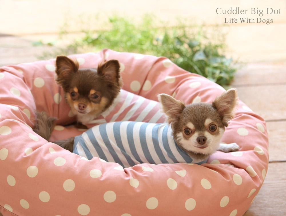 犬と生活 カドラービッグドット