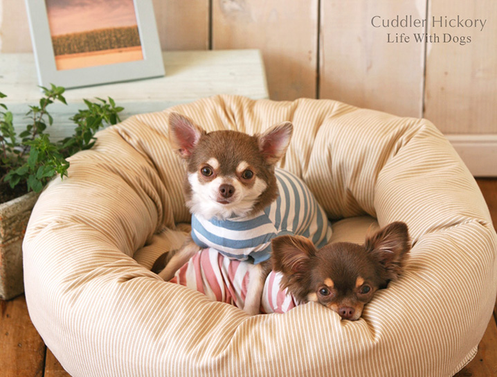犬と生活 カドラーヒッコリー