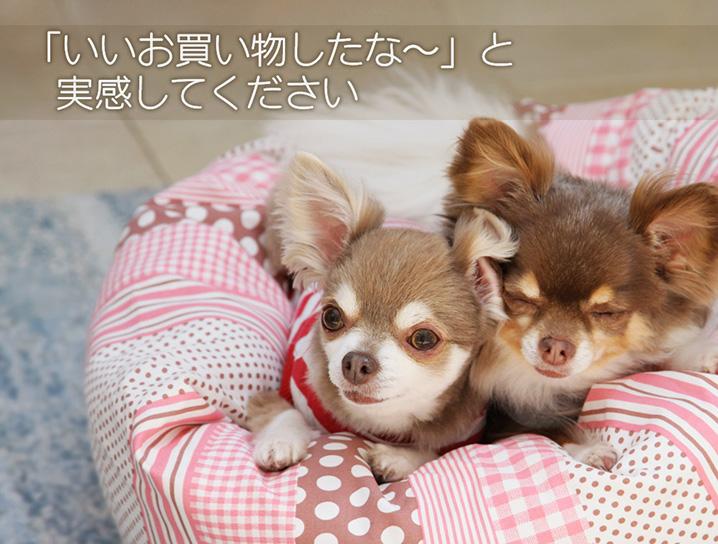 犬と生活 カドラービッグドットパンツ