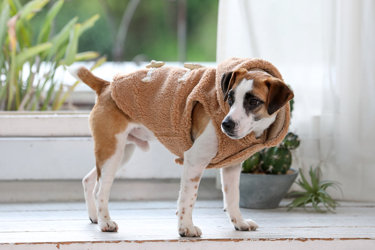 犬と生活 ボアダッフル(ハーネス対応)【犬服 冬服 小型犬 中型犬】