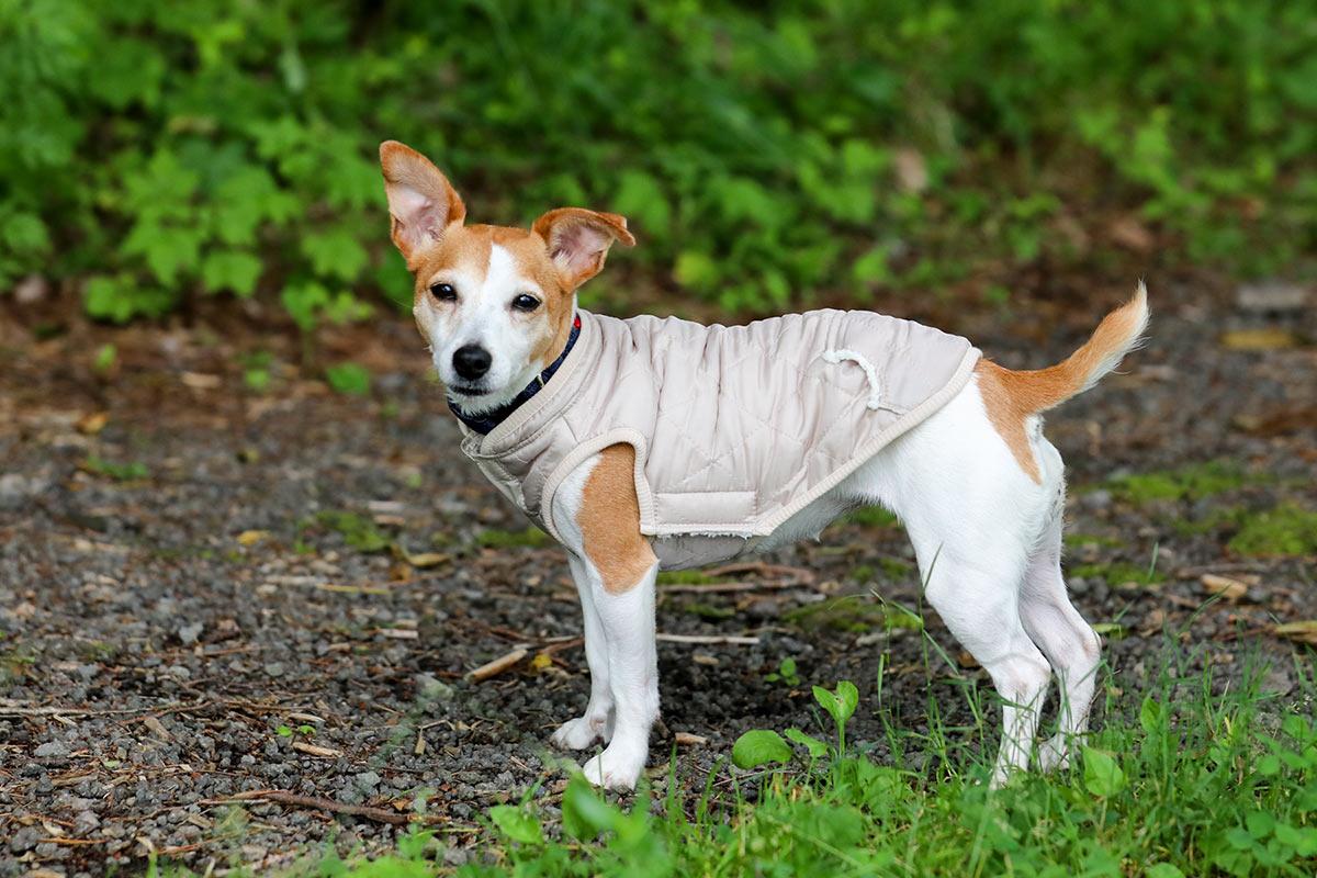 犬と生活 キルティングイージーコート【犬服 冬服 小型犬 中型犬】