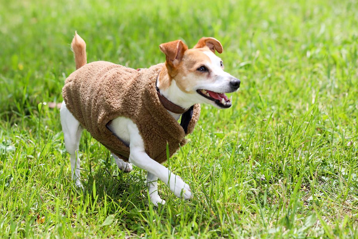 犬と生活 ボアダウン(ハーネス対応)【犬服 冬服 小型犬】