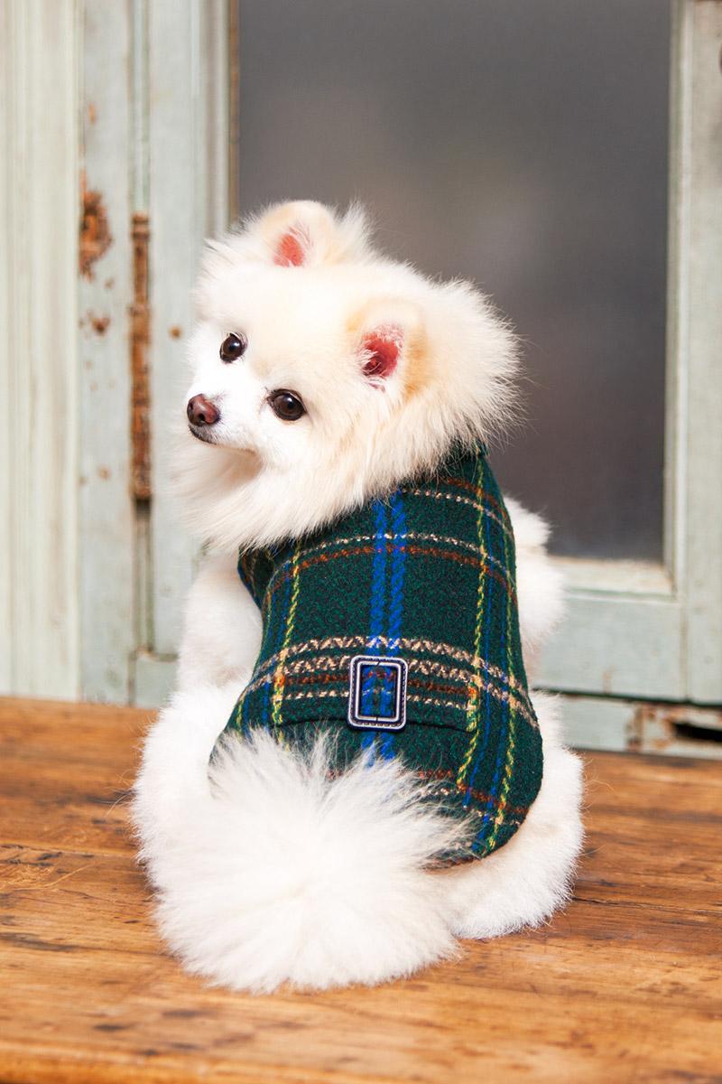 犬と生活 イージーコート 【犬服 冬服 小型犬】