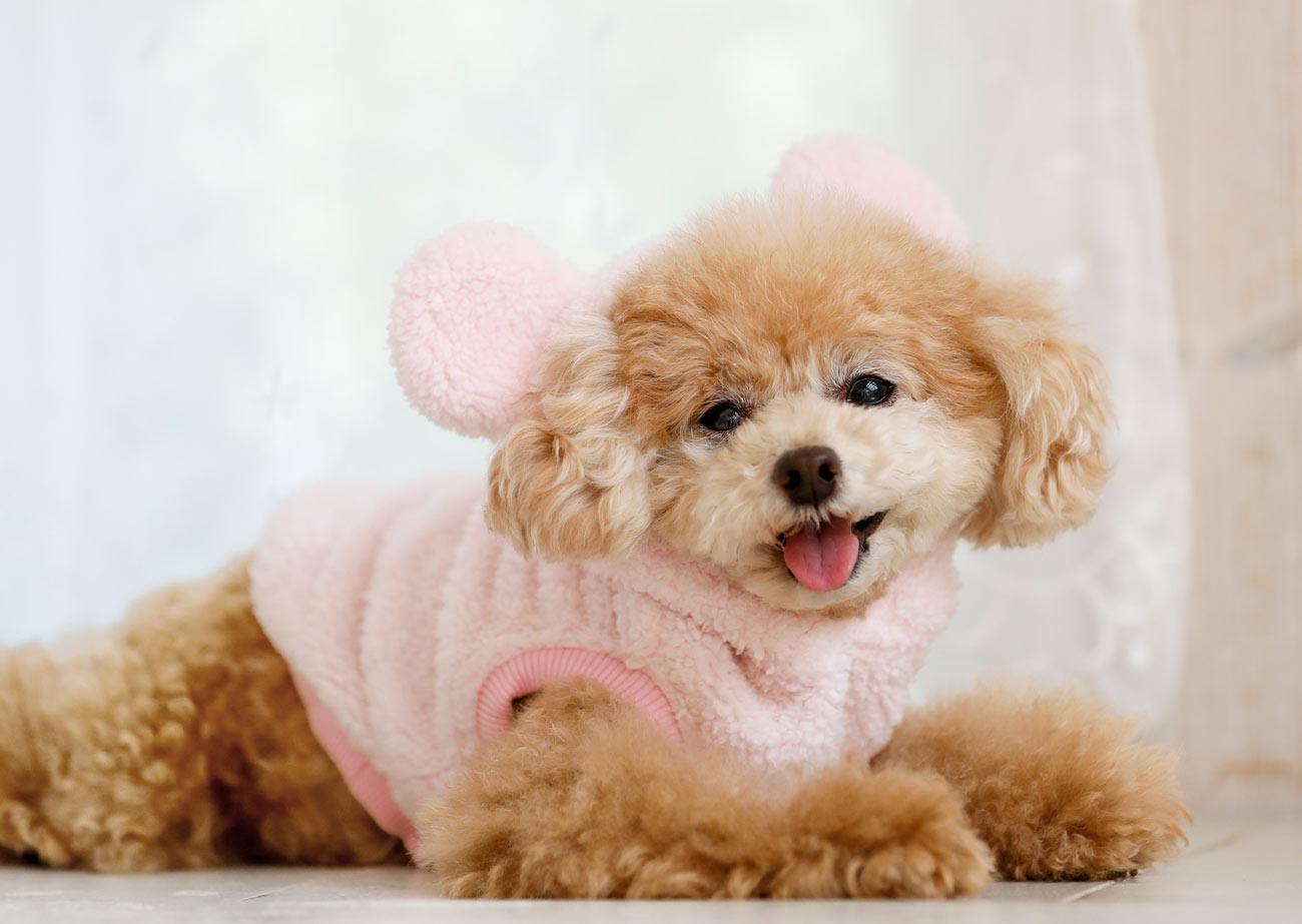 犬と生活 モハくまパーカー 【犬服 冬服 小型犬】