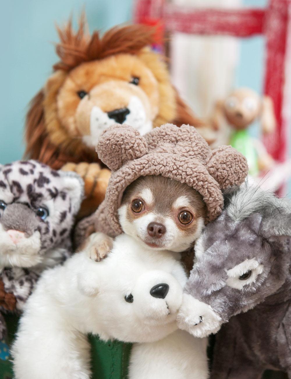 犬と生活 モハくまパーカー 【犬服 冬服 小型犬 防寒】