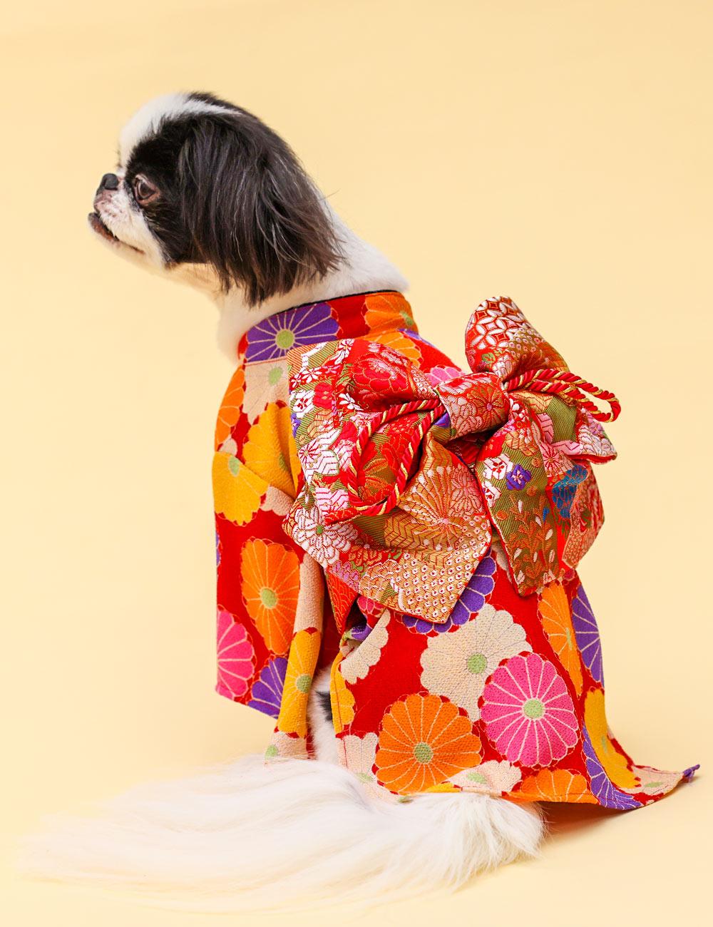 犬と生活 お振袖 【犬服 晴れ着 中型犬 和服 小型犬】