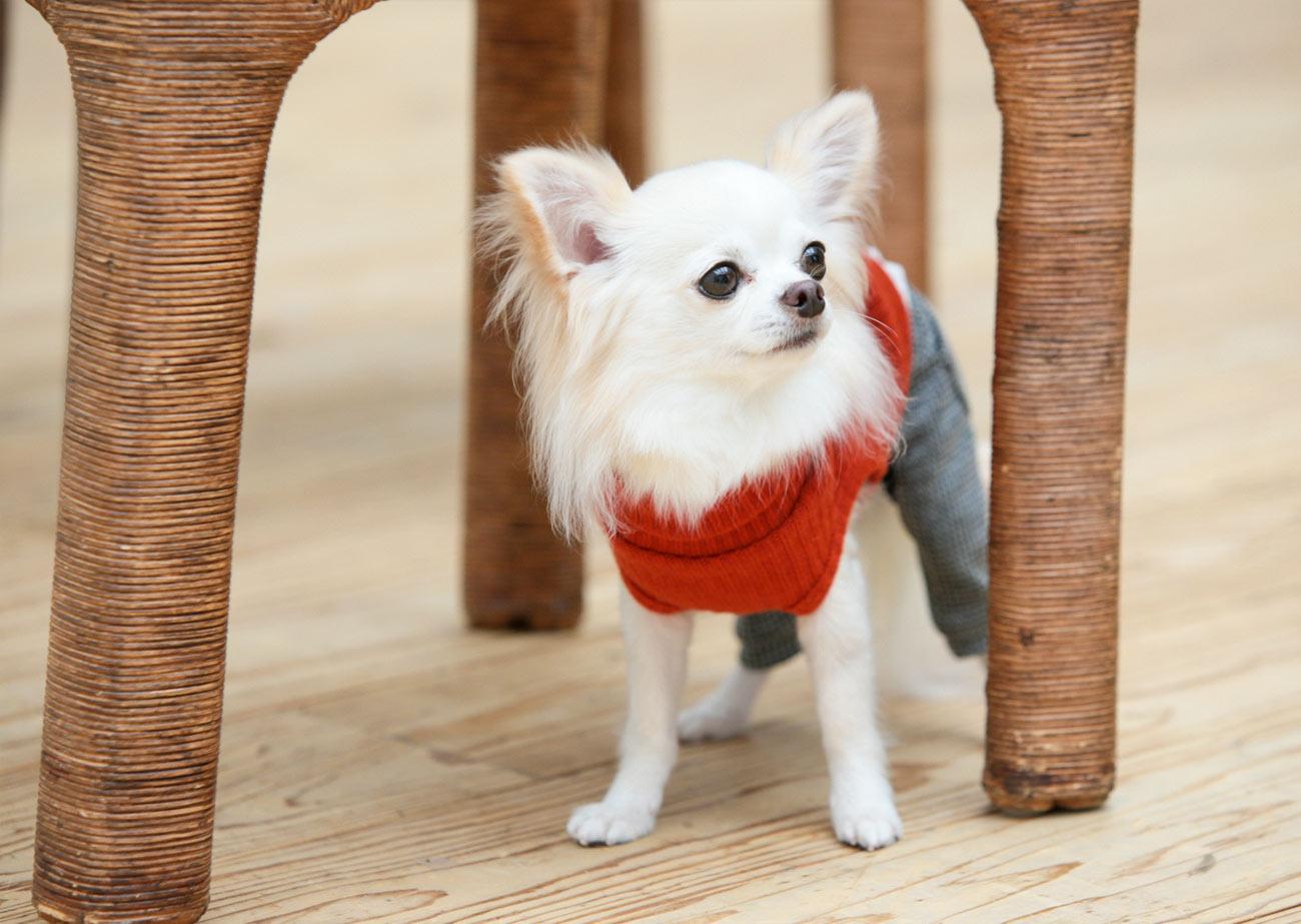 犬と生活 Lシャツパンツ 【犬服 秋冬服 小型犬】