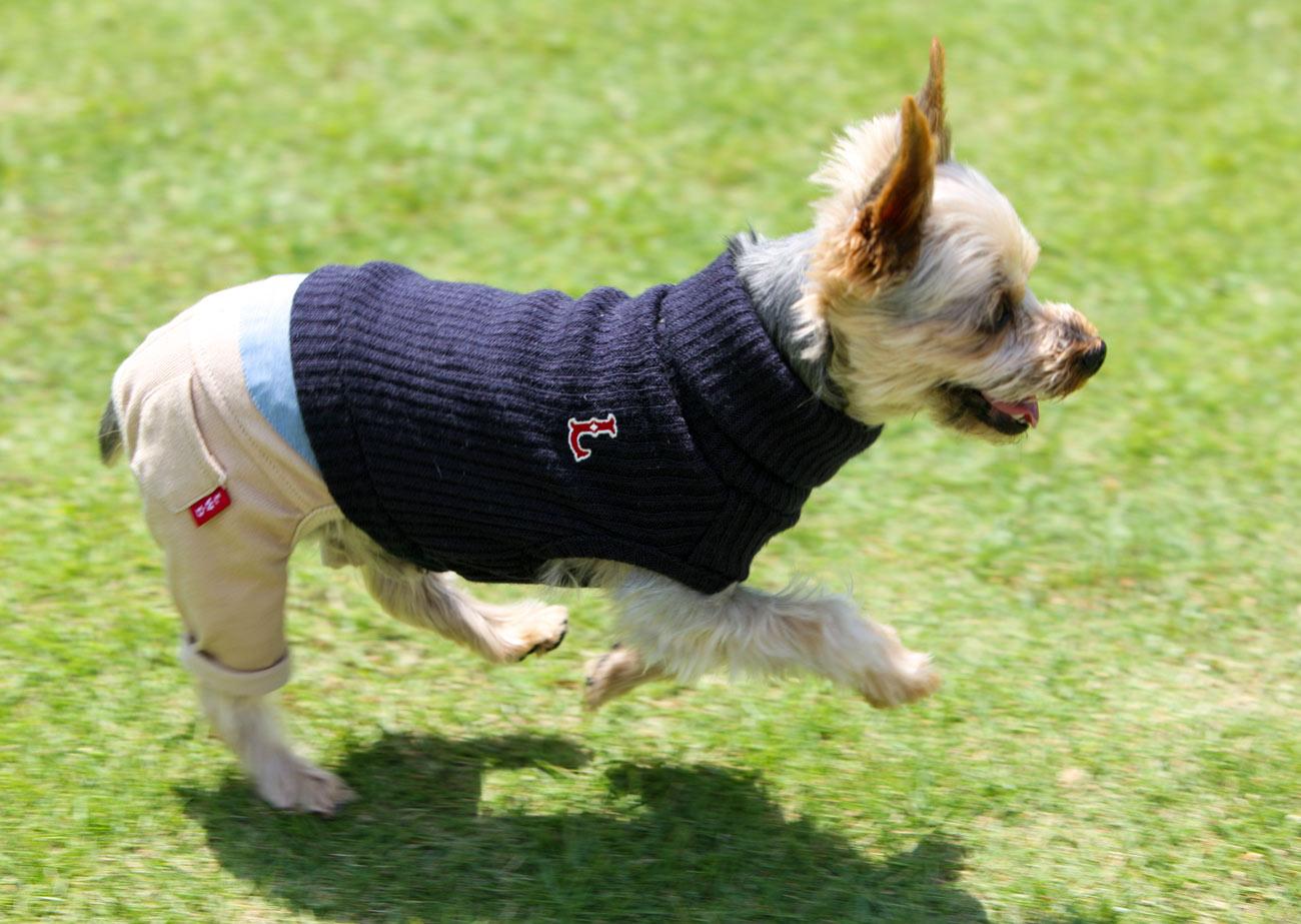 犬と生活 Lシャツパンツ 【犬服 冬服 小型犬】