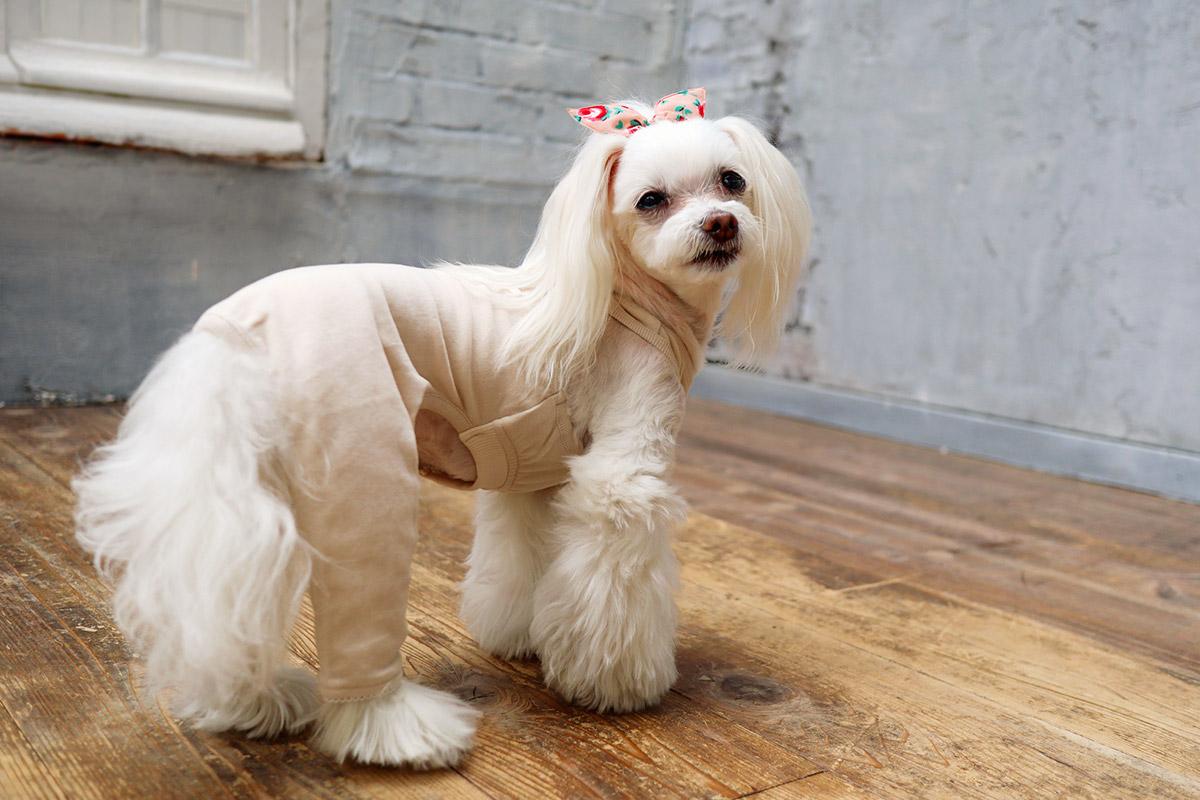 犬と生活 重ね着用スパッツ 【犬服 冬服 カバーオール 小型犬のつなぎ】