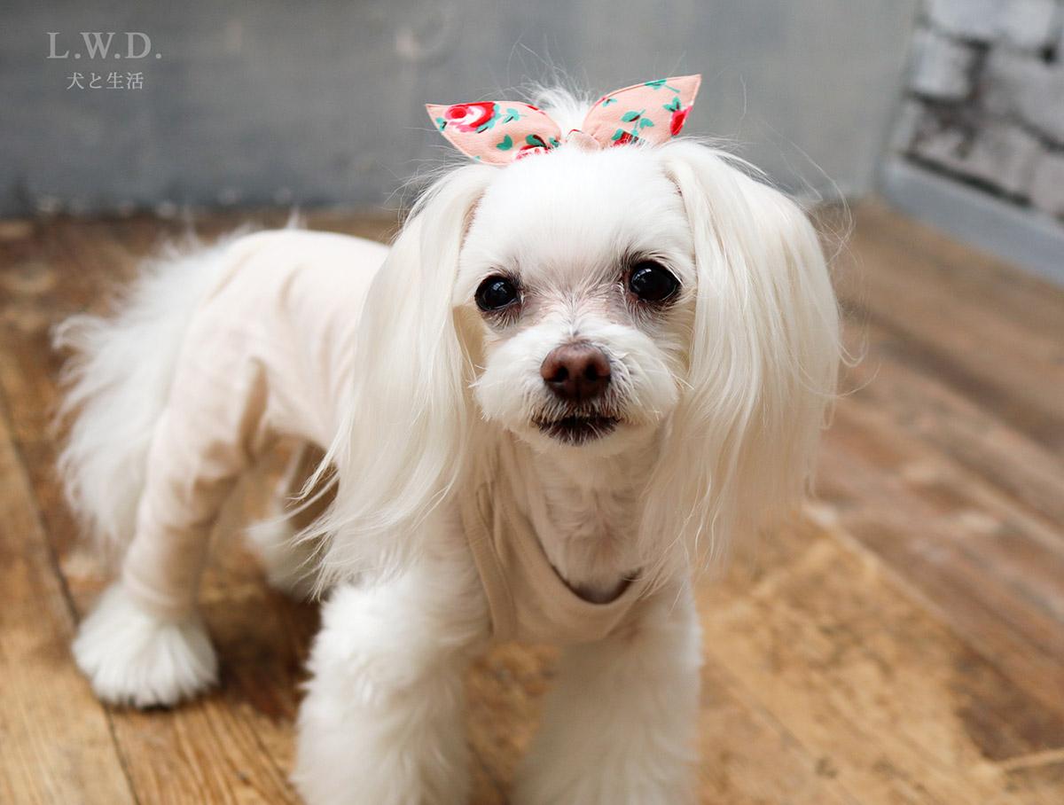 犬と生活 重ね着用スパッツ 【犬服,冬服,小型犬,プレミアムウォーム,】