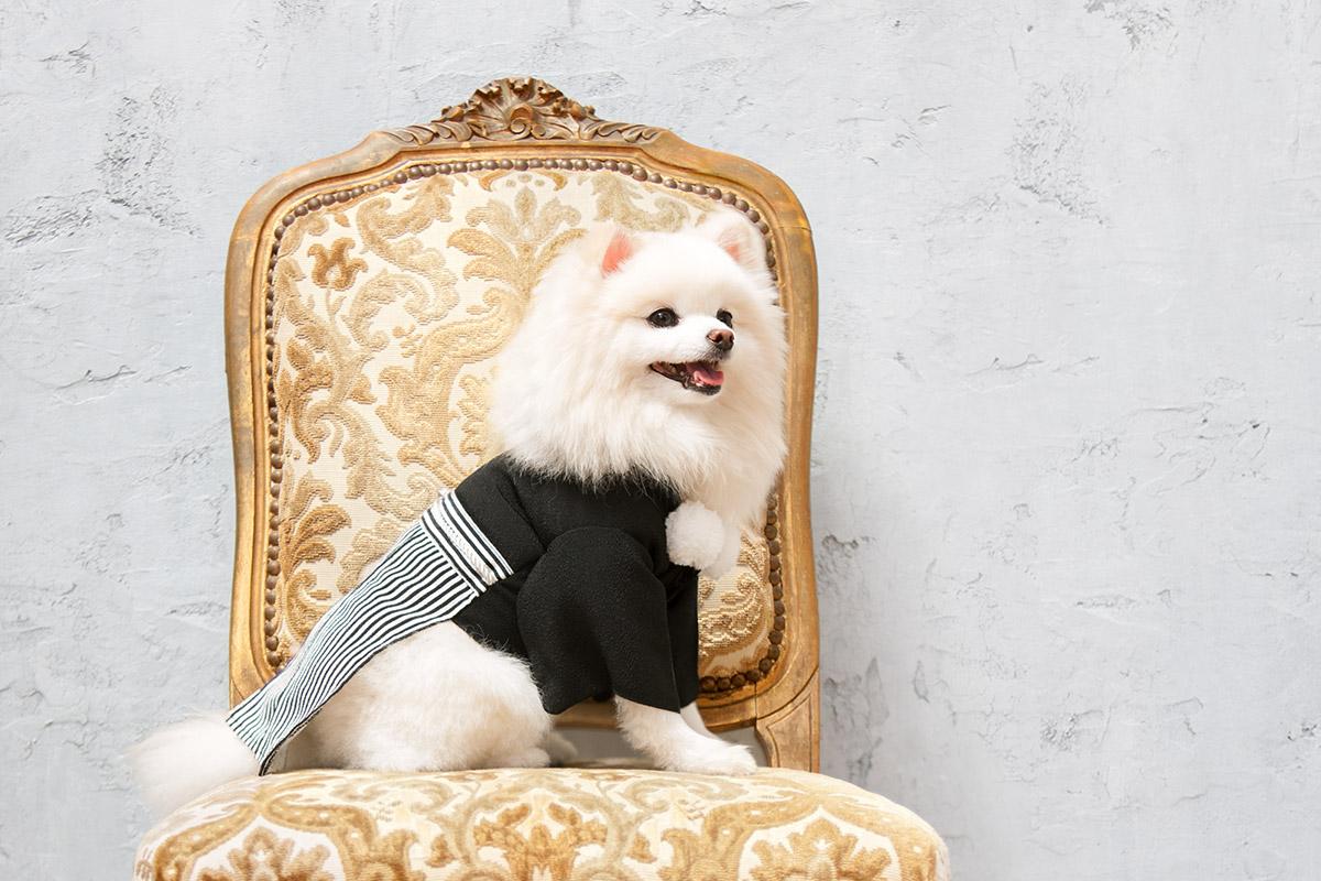 犬と生活 紋付袴【フォーマルウェア,和装】