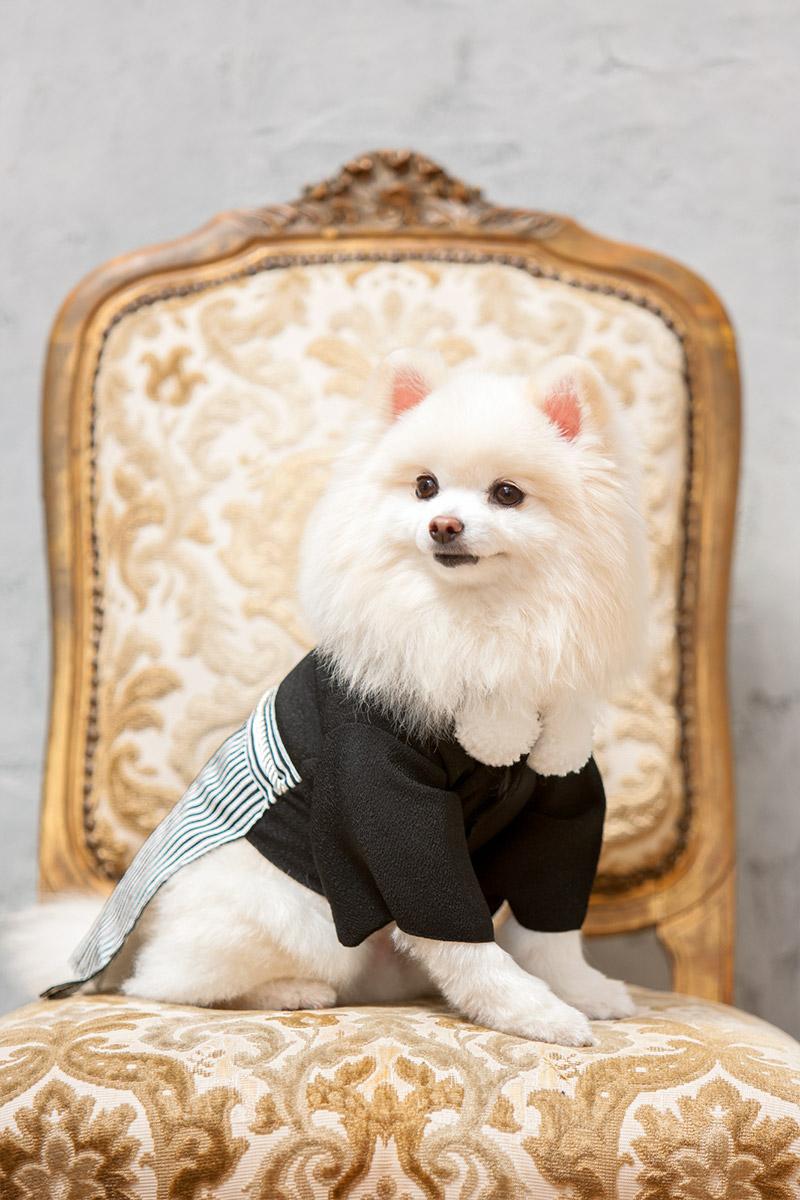 犬と生活 紋付袴 【小型犬用の紋付袴・お正月や七五三、結婚式の撮影にどうぞ】