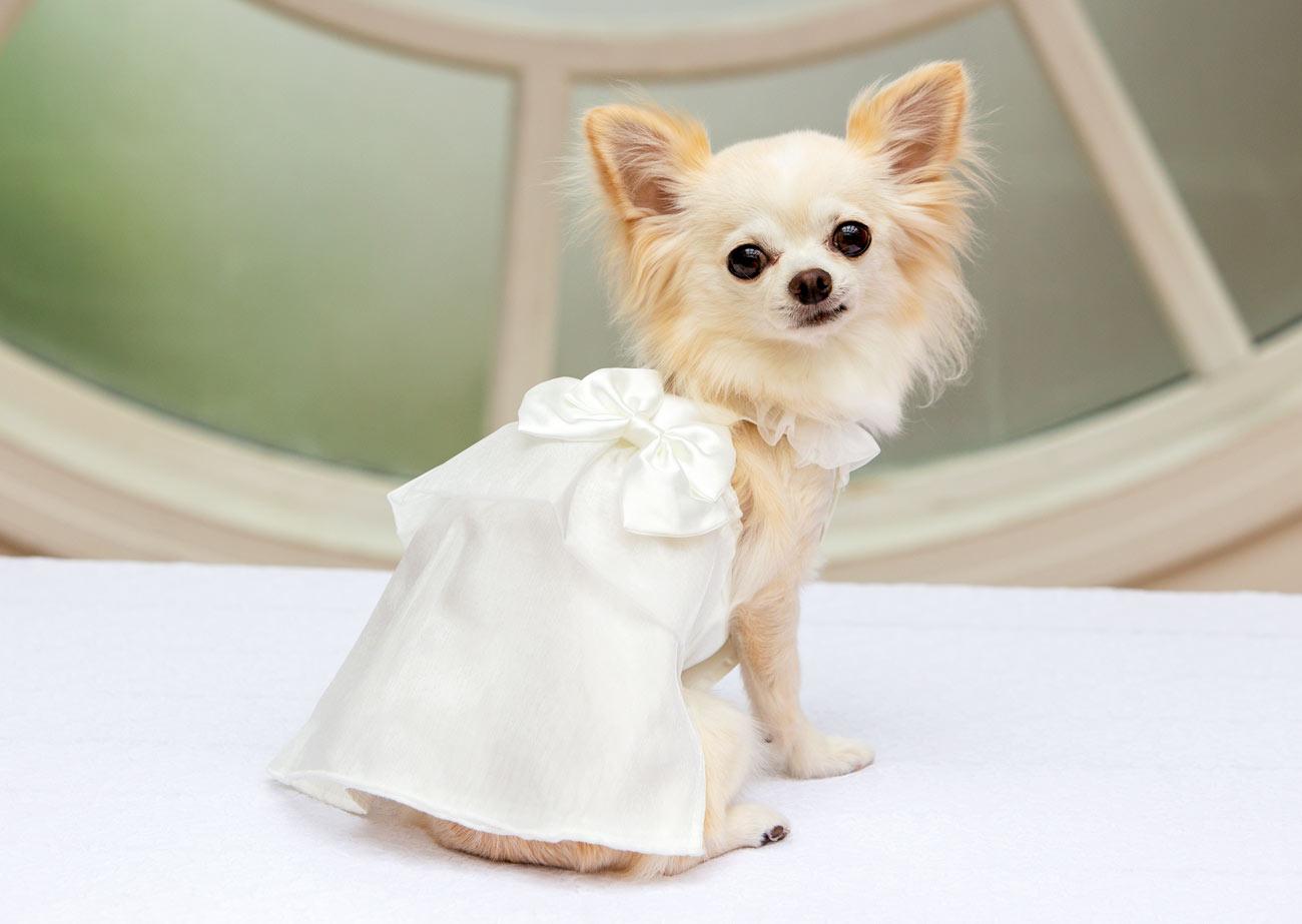 犬と生活 パーティードレス 【犬服 秋冬服 小型犬】