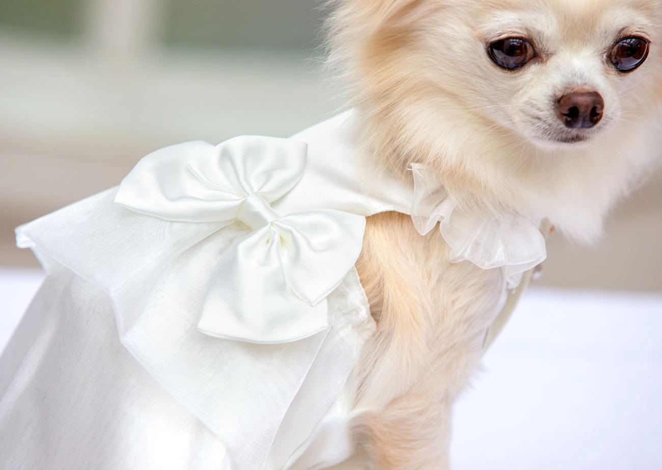 犬と生活 パーティードレス 【犬服 冬服 小型犬】