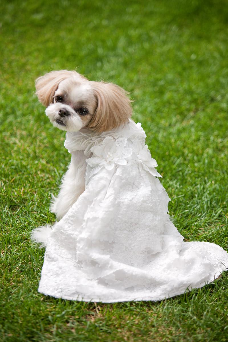 犬と生活 ウェディングドレス 【結婚式のワンちゃんとの撮影に】