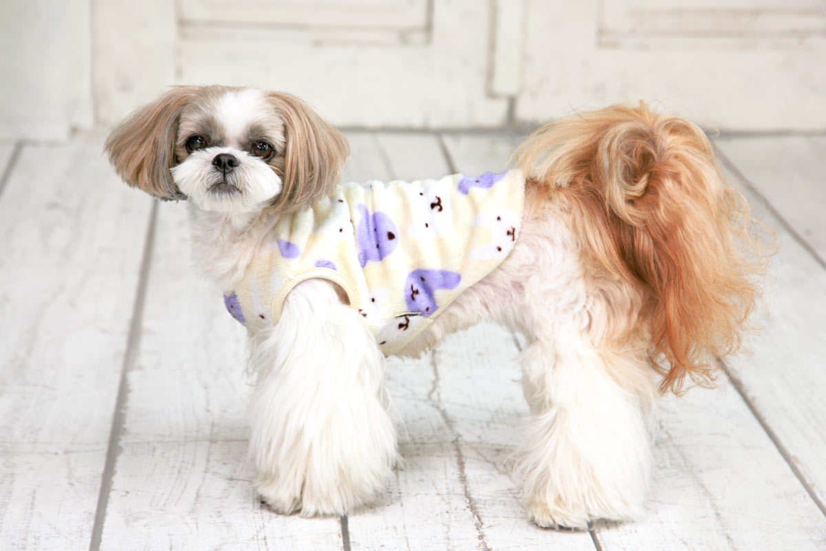 犬と生活 ふわクマフリース 【犬服 冬服 小型犬】