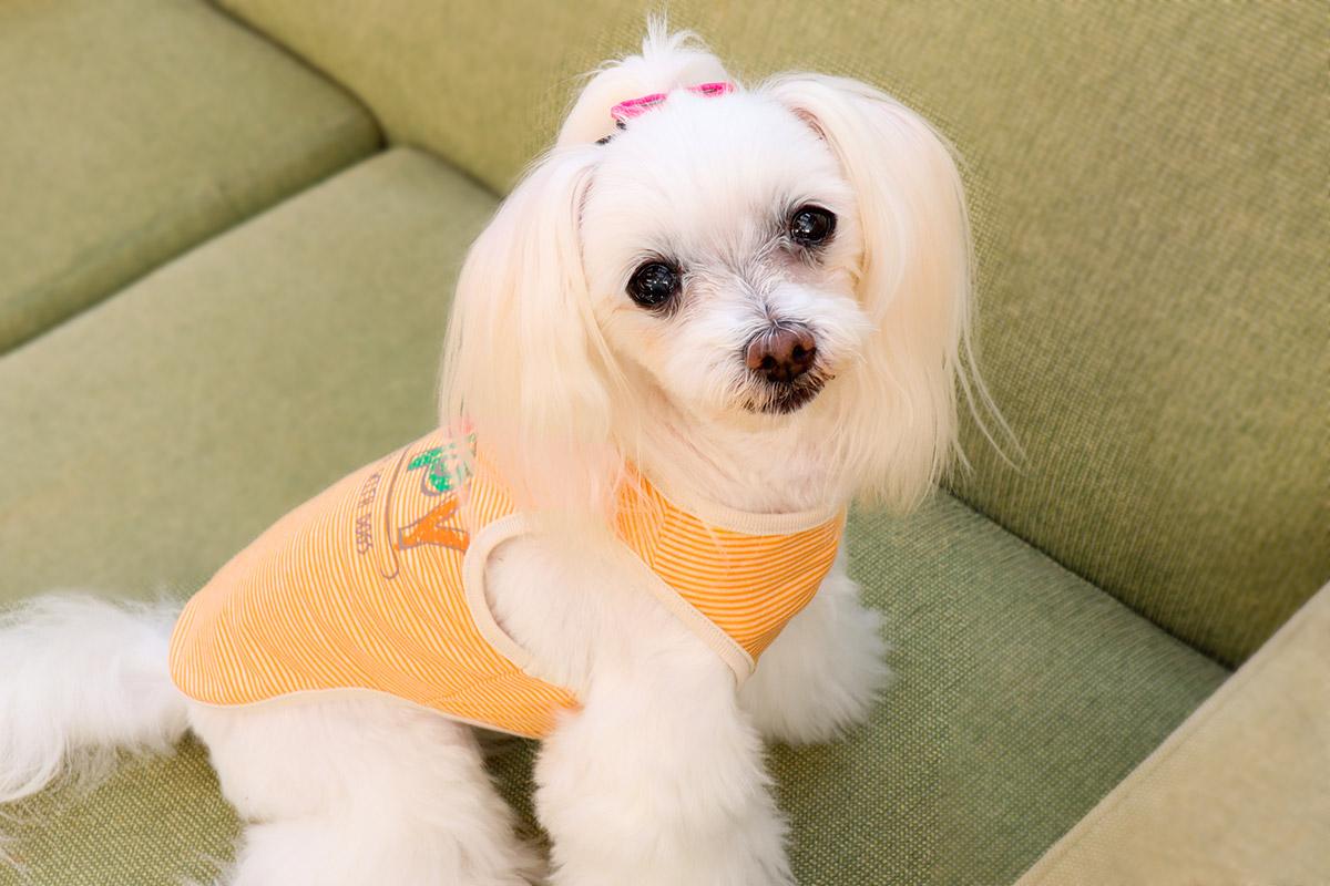 犬と生活 Happyタンク 【犬服 夏服 小型犬】