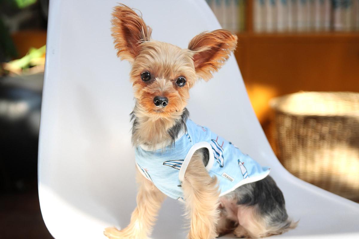 犬と生活 カモメタンク 【犬服 夏服 小型犬】