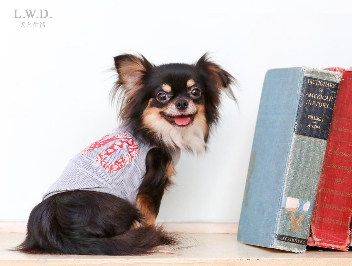 犬と生活 クールメッシュタンクLWD 【犬服 夏服 小型犬】