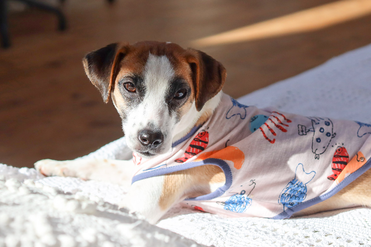 犬と生活 おさかなタンク・恐竜タンク 【犬服 夏服 小型犬】