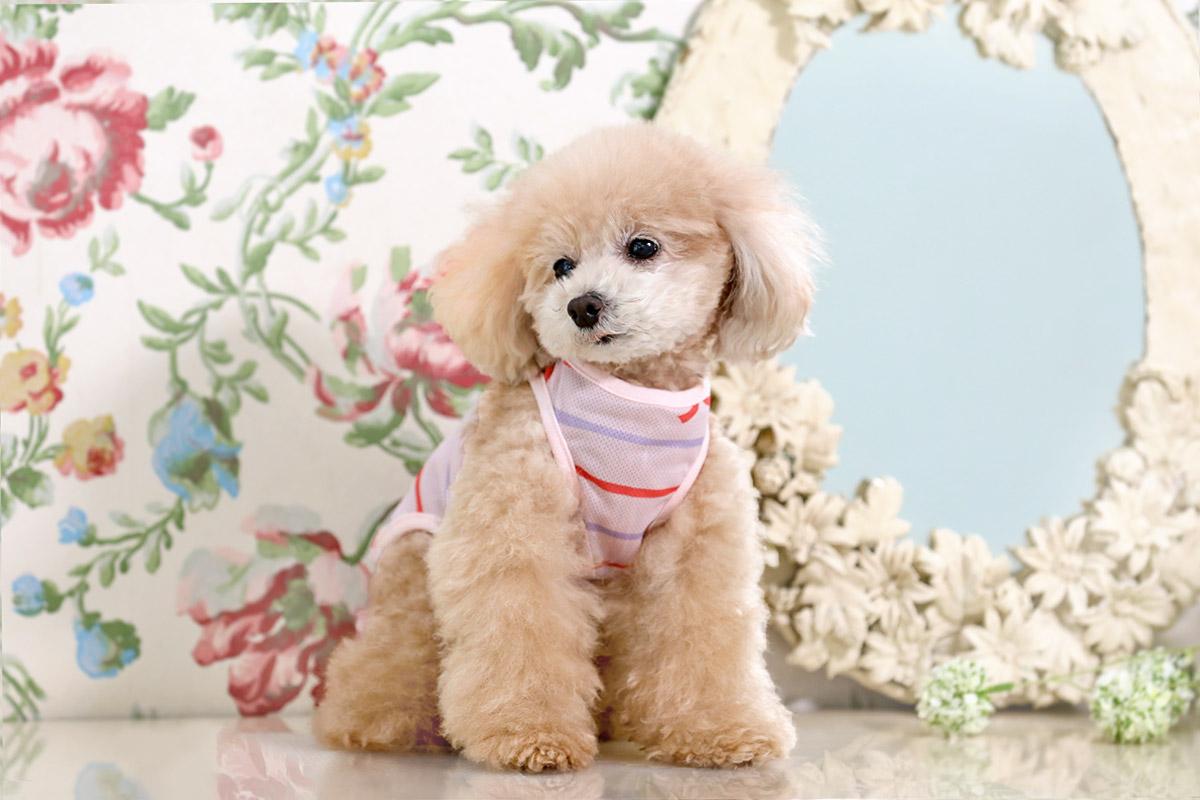 犬と生活 クールメッシュタンクリボン 【犬服 夏服 小型犬】