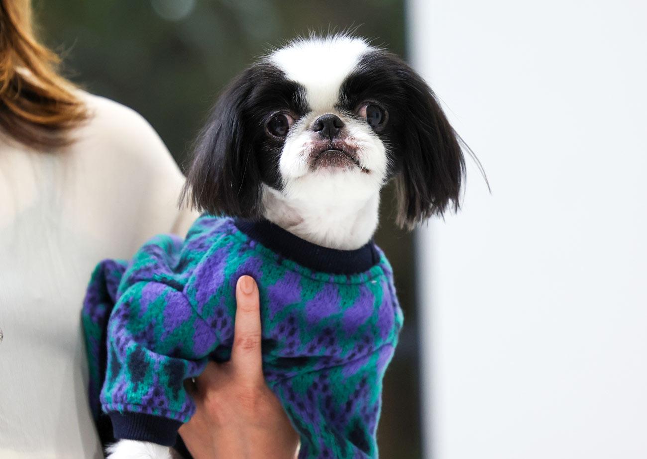犬と生活 アーガイルニット 【アーガイルニット セーター 犬服 冬服 小型犬 中型犬 防寒】