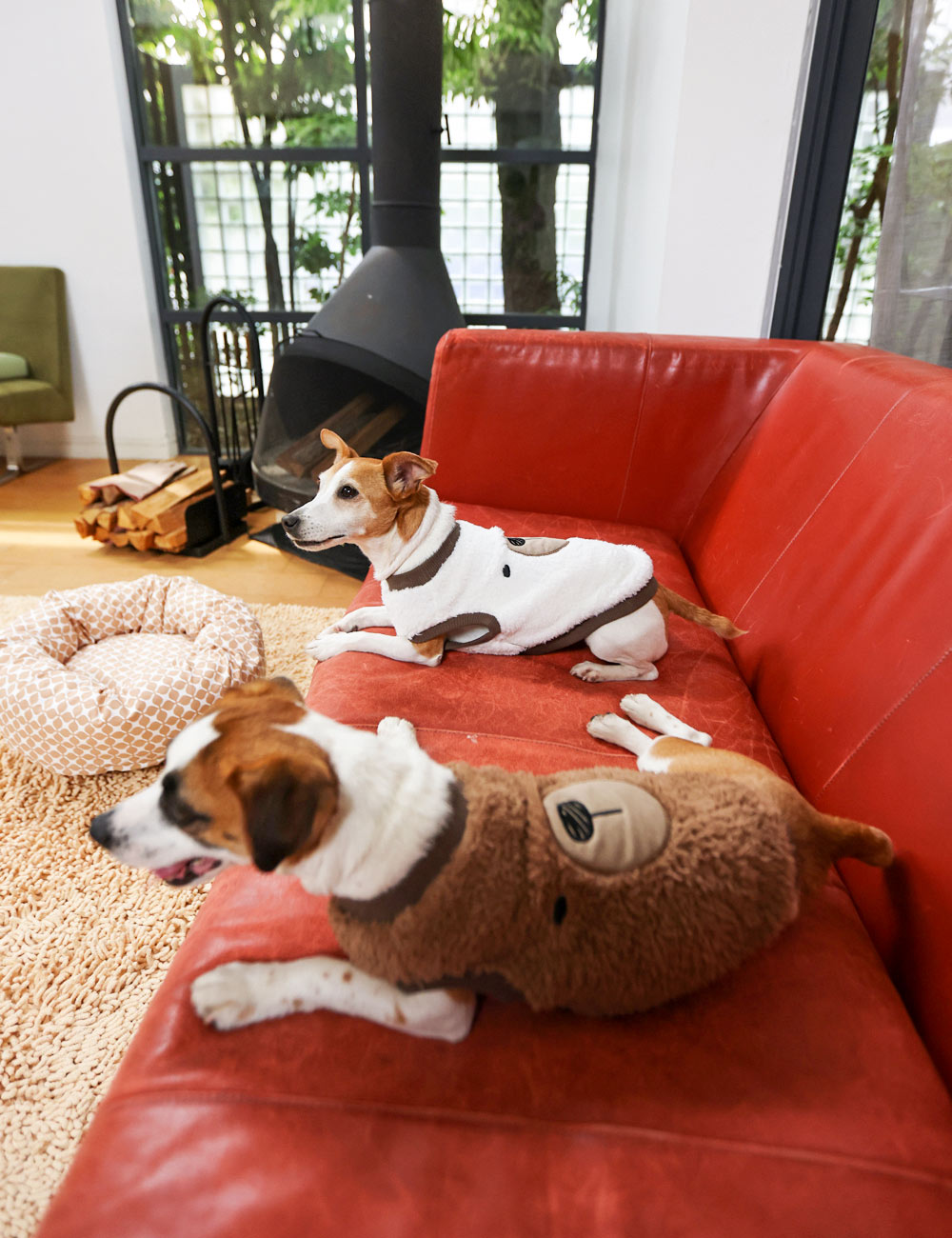 犬と生活 ボアフリースくまさん 【犬服 冬服 小型犬】