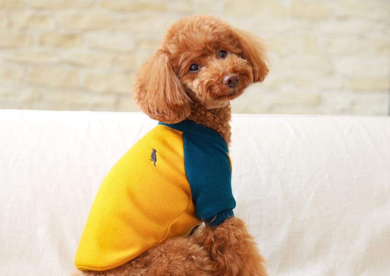 犬と生活 カーディガン 【SNS 犬服 冬服 小型犬】