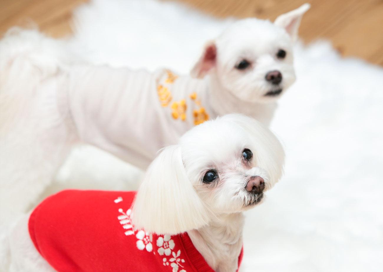 犬と生活 ニットフラワーベスト 【犬服 冬服 小型犬】