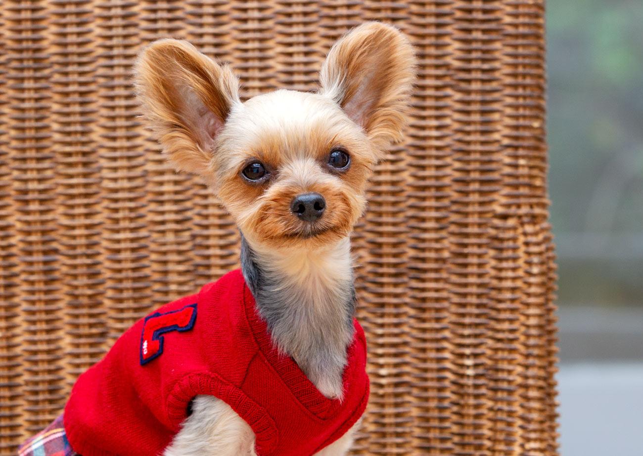 犬と生活 ニットベスト 【犬服 冬服 小型犬】