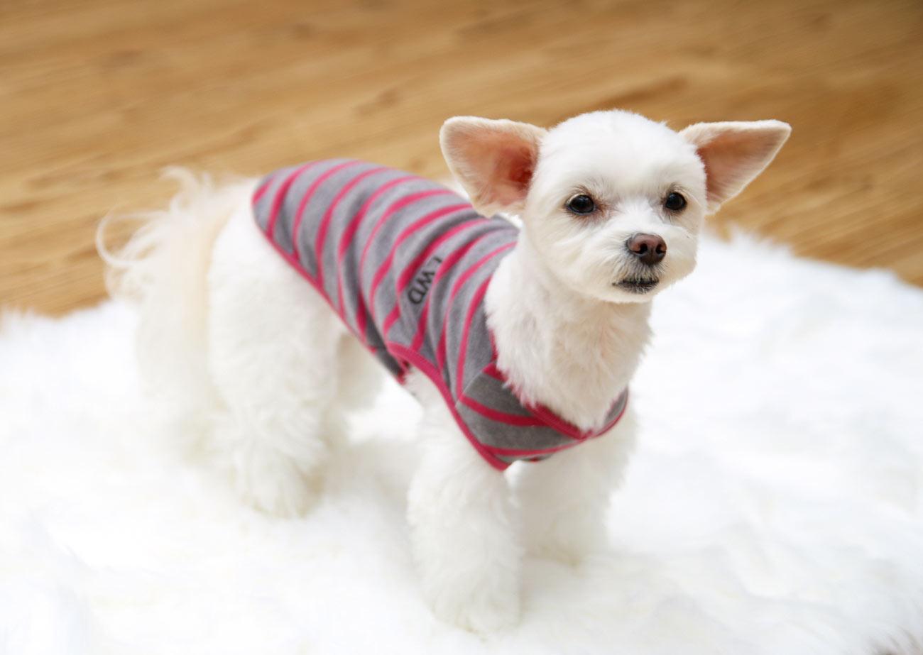 犬と生活 ウォームベスト 【犬服 冬服 小型犬】