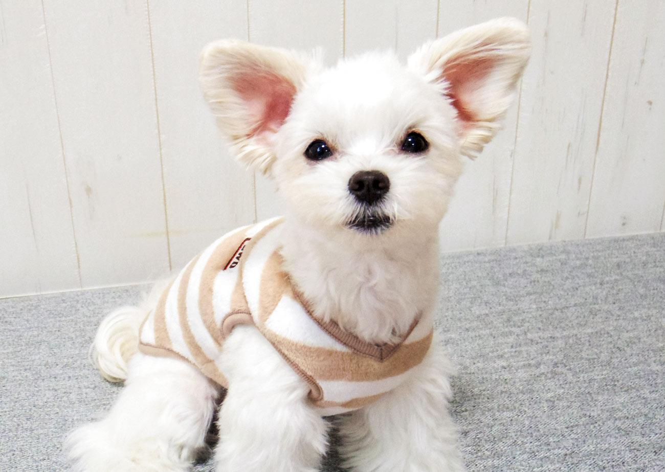 犬と生活 モハフリースビッグボーダー 【犬服 冬服 小型犬】