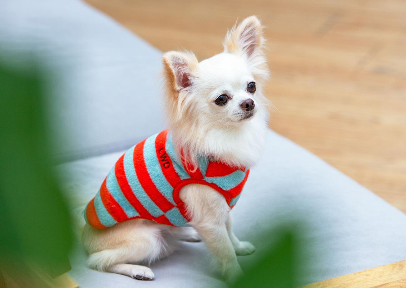 犬と生活 モハフリースビッグボーダー 【老犬介護 犬服 冬服 小型犬】