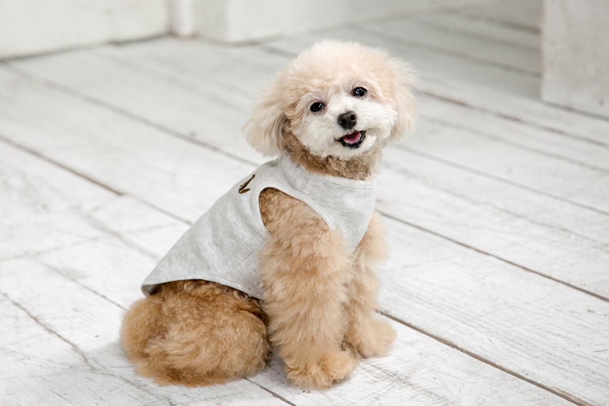 犬と生活 オーガニックコットンタンク 【犬服 綿100 小型犬 中型犬 老犬介護】