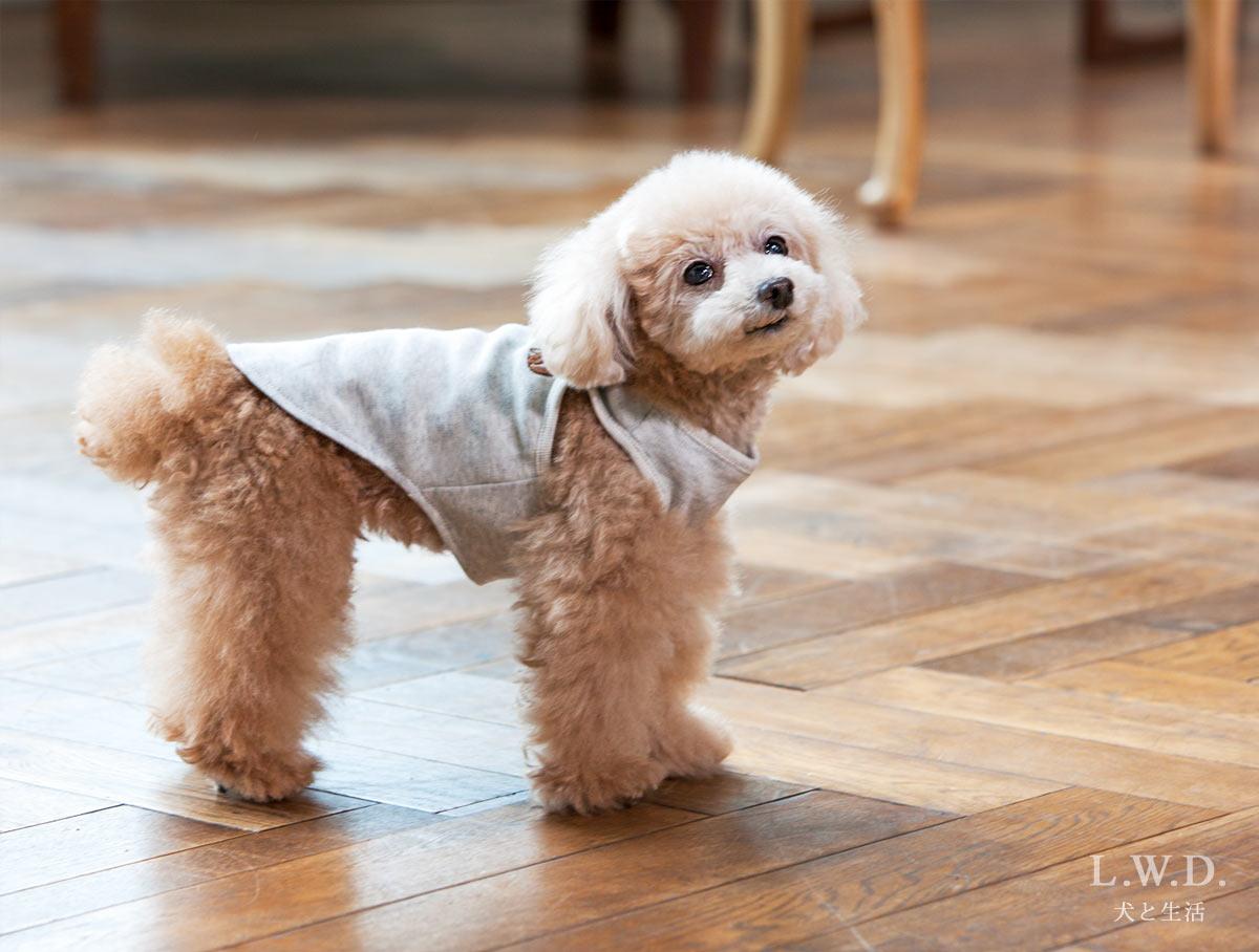 犬と生活 オーガニックコットンタンク 【犬服 綿100 小型犬 老犬介護】