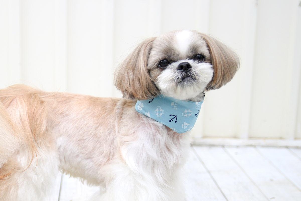 犬と生活 クールネックバンド 【ソフト保冷剤入り 暑さ対策】