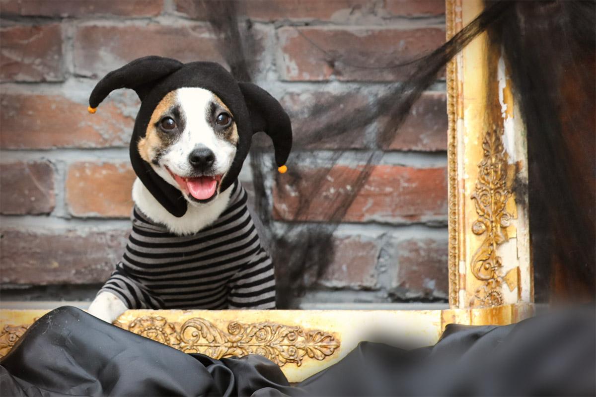 ハロウィンハット デビル 【犬服 冬服 小型犬 変装 コスプレ】