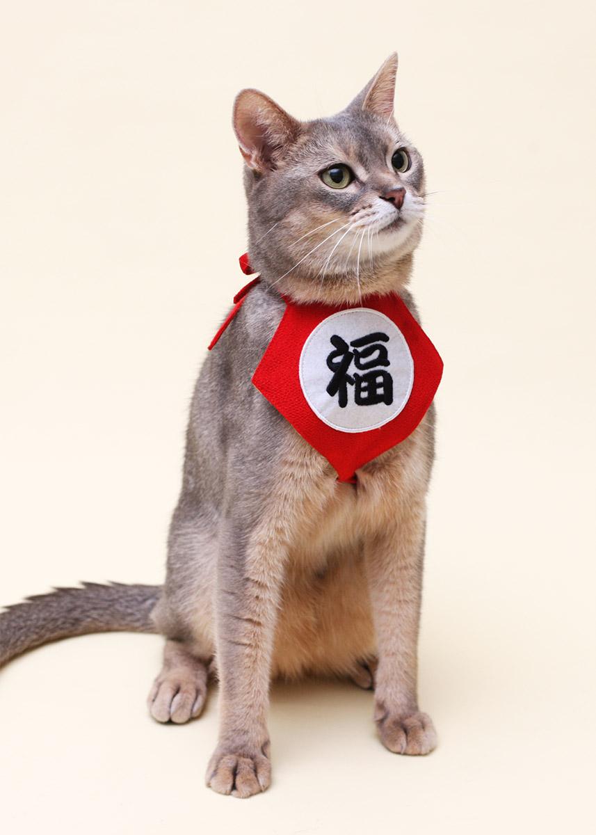 犬と生活 福まえかけ 【コスプレ,年賀,インスタ】