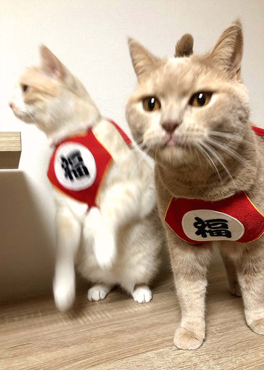 犬と生活 福まえかけ 【コスプレ,年賀,インスタ