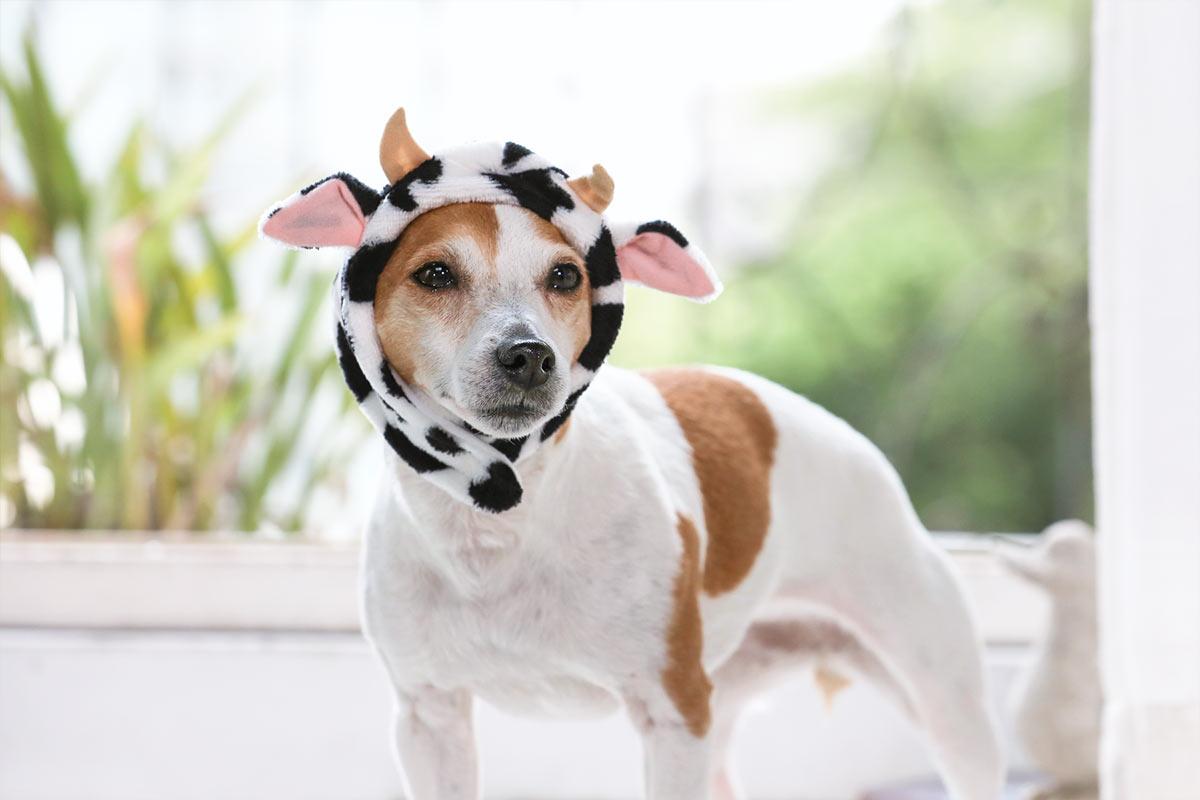 犬と生活 ロウカドラー クレンゼ 【抗菌・抗ウイルス ベッド 洗える 皮膚炎 術後】