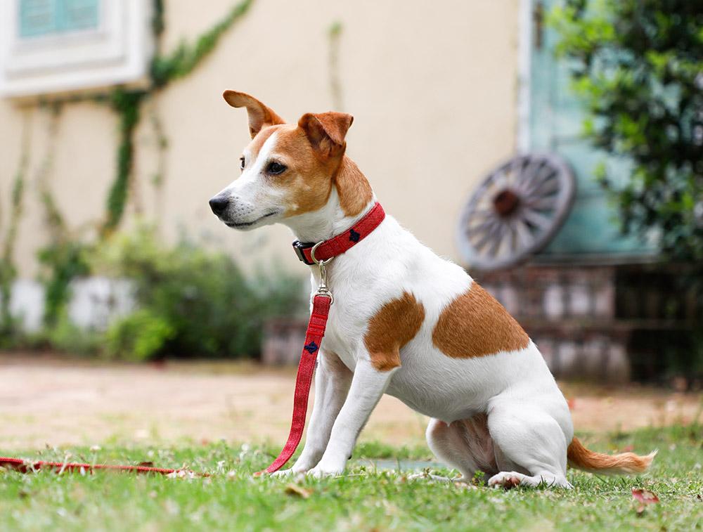 犬と生活 デニム カラー リード