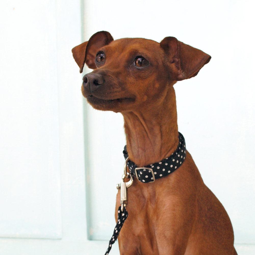 犬と生活 ドット カラー リード